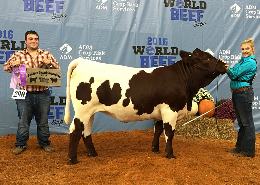 16-Res-Grand-Champ-Pinzgauer-Femail-World-Beef-Expo-Shelby-Ferguson