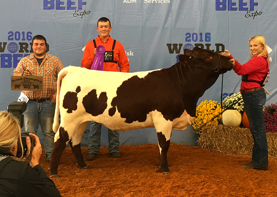 17-Champion-Pinzgauer-Femail-World-Beef-Expo-Shelby-Ferguson