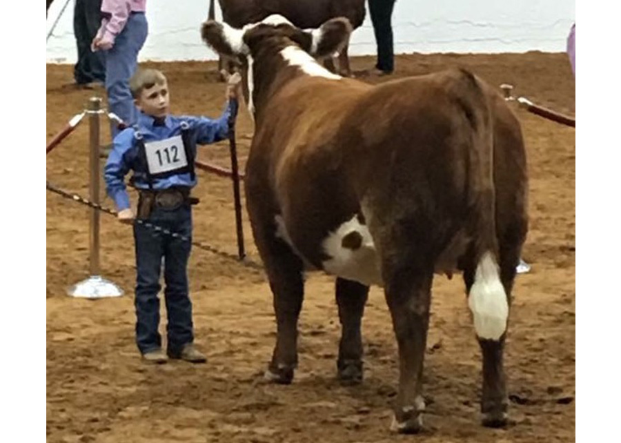 Class Winner2017 Ft Worth Jr Polled Hereford ShowShown By: Brody Brogan