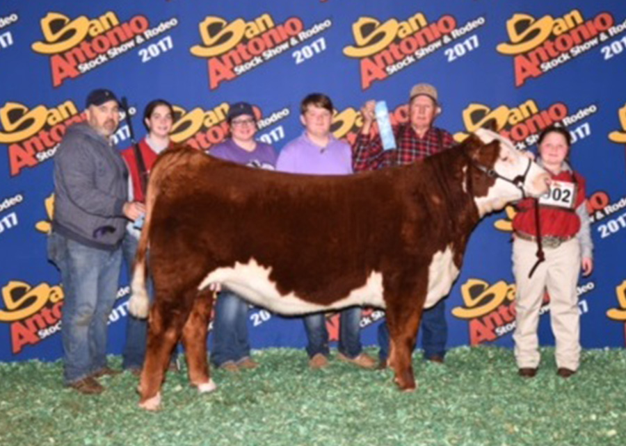 Class Winner Polled Hereford Heifer2017 San Antonio Livestock ShowCaly Blacksher