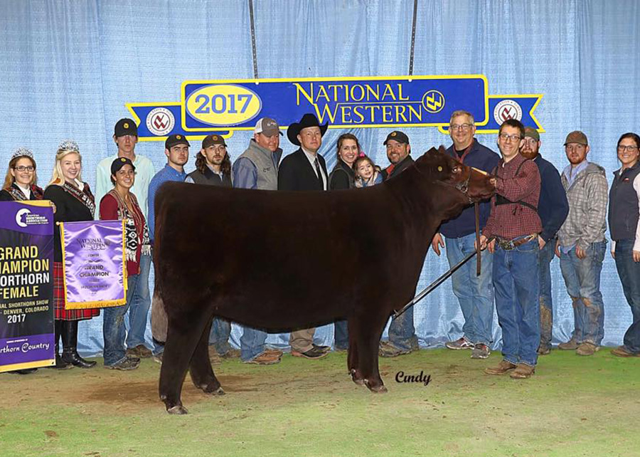 Grand Champion Shorthorn Female2017 NWSS National Shorthorn ShowShown By: Tyler Cates