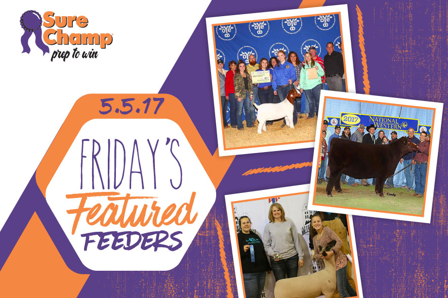 Sure Champ Featured Feeders Friday