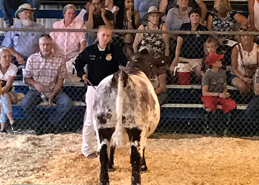 FFA Champion2017 Redwood Empire FairClaire Brackett