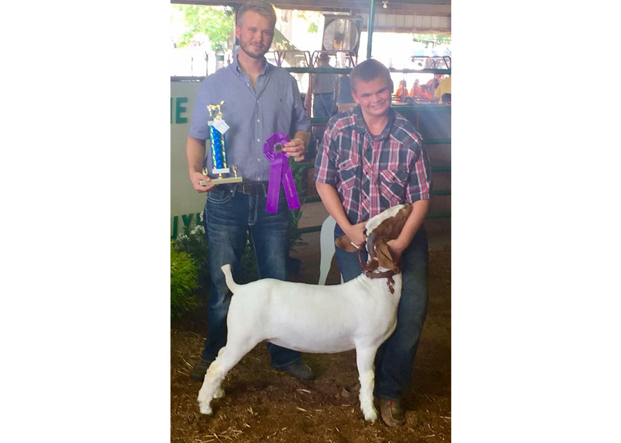 Grand Champion Mkt Doe2017 Vanderburgh County 4-H Boer Goat ShowCaleb Welte