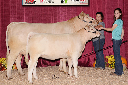 17-grand-champion-charolais-cow-calf-pair-keystone-international-livestock-expo-kaitlin-smith