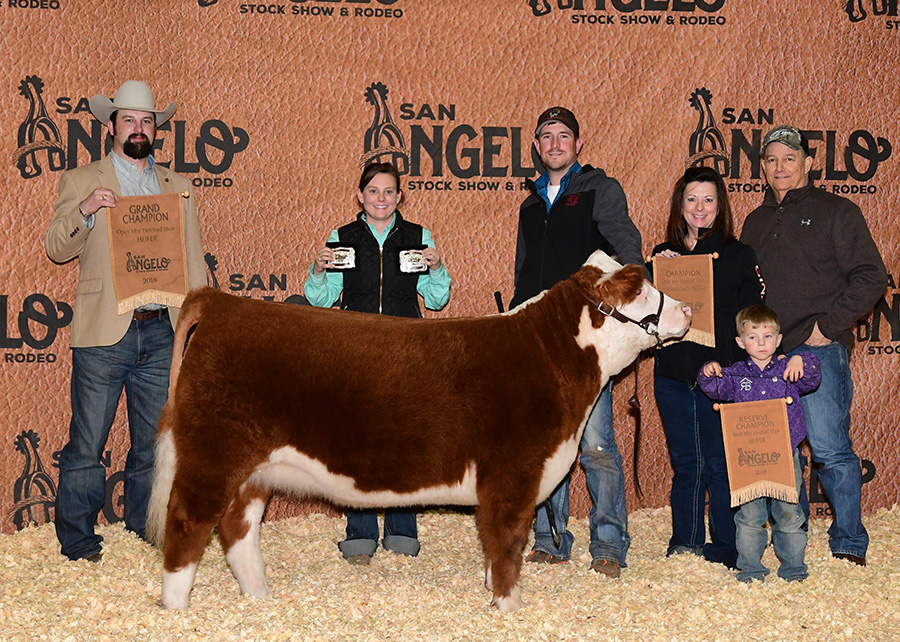 18-Grand-champion-mini-Hereford-heifer-in-the-open-show-san-angelo