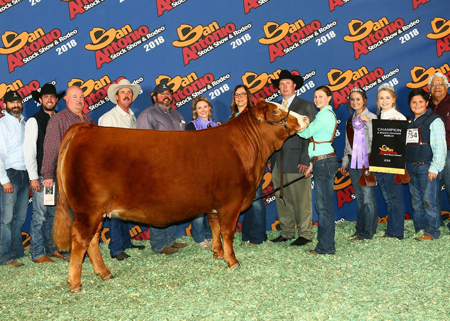 18-San-Antonio-Stock-Show-Grand-Champion-Simbrah-Heifer