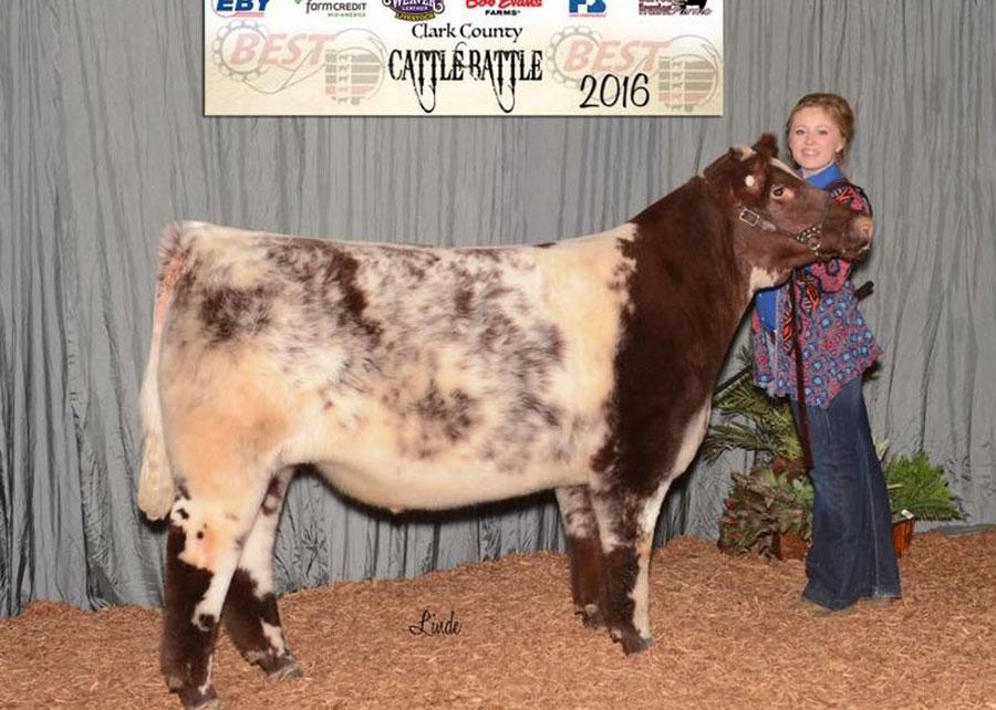 16-grand-champion-steer-ohio-beef-expo-emma-matthews