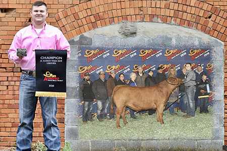 18-grand-champion-limousin-steer-sale-trey-denny