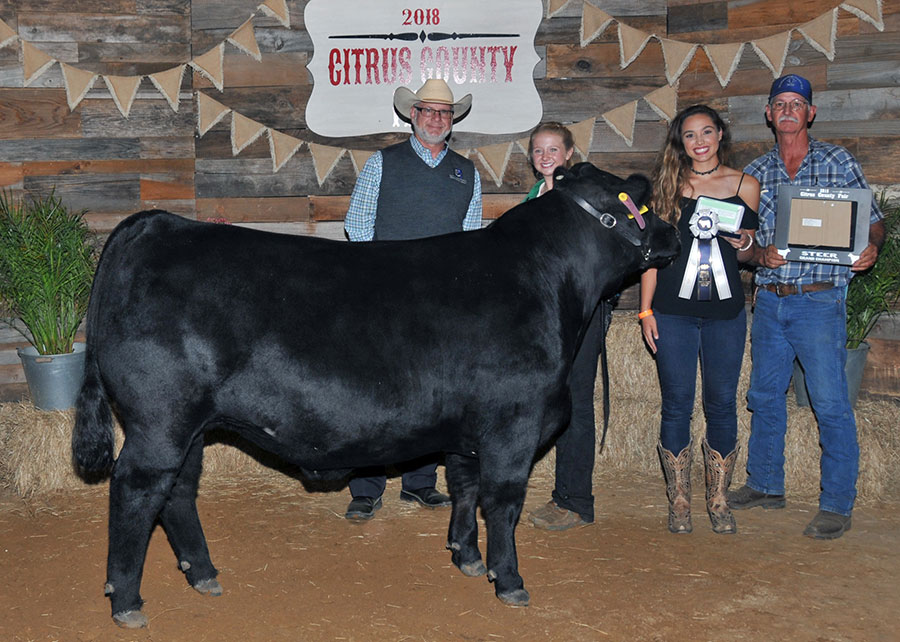 18-grand-champion-mkt-steer-citrus-county-fair-taylor-waller