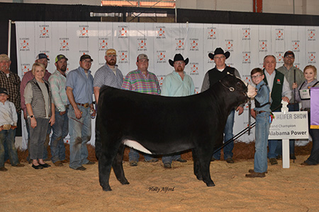 18-supreme-heifer-al-jr-beef-expo