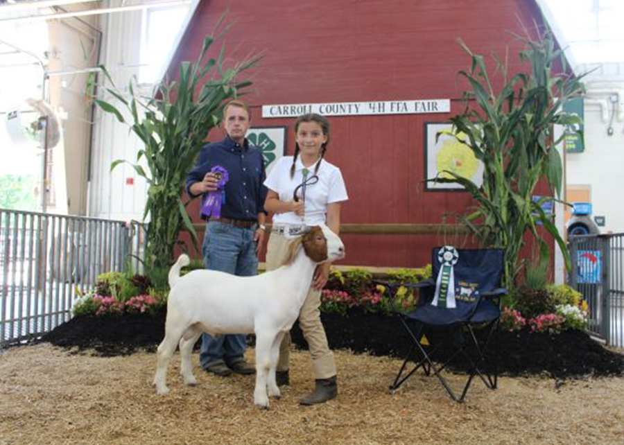 18 Carroll County 4-H & FFA Fair, Overall Grand Champion Buck, Shown by Colleen Haines Champ