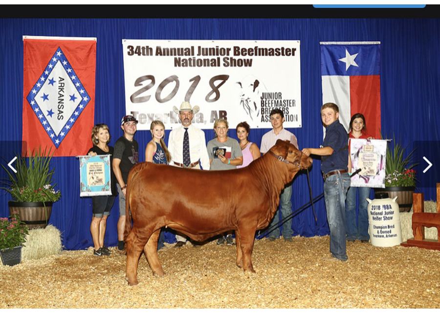 18 National JBBA Show, Grand Champion, Shown by Shawn Skaggs Champ