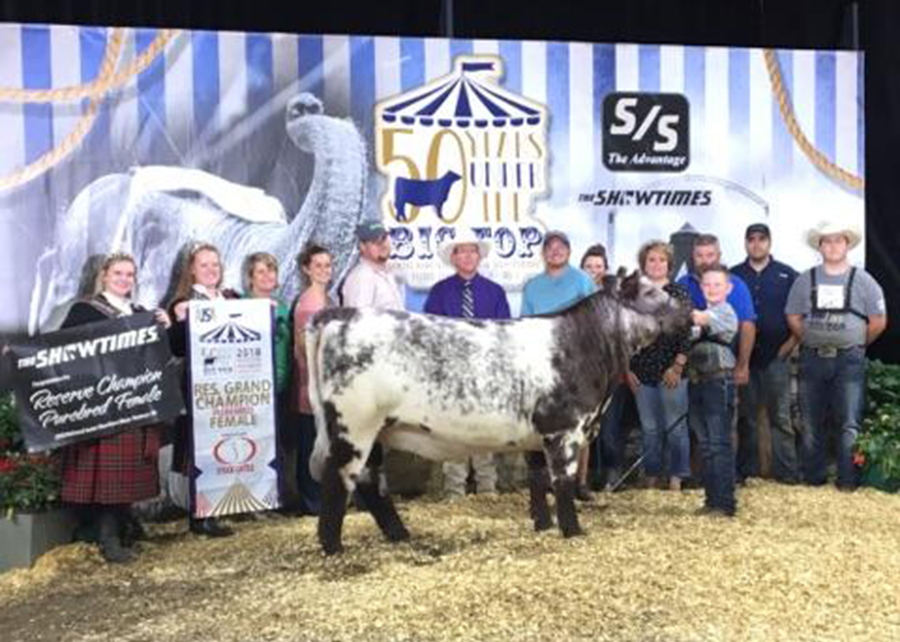 18 National Jr. Shorthorn show, Reserve Grand Champion, Shown by Reid Utterback champ