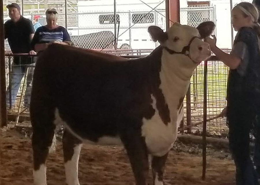 18 Paris Tx Preview Show, Breed Champion, Shown by Jenna Pharr Champ
