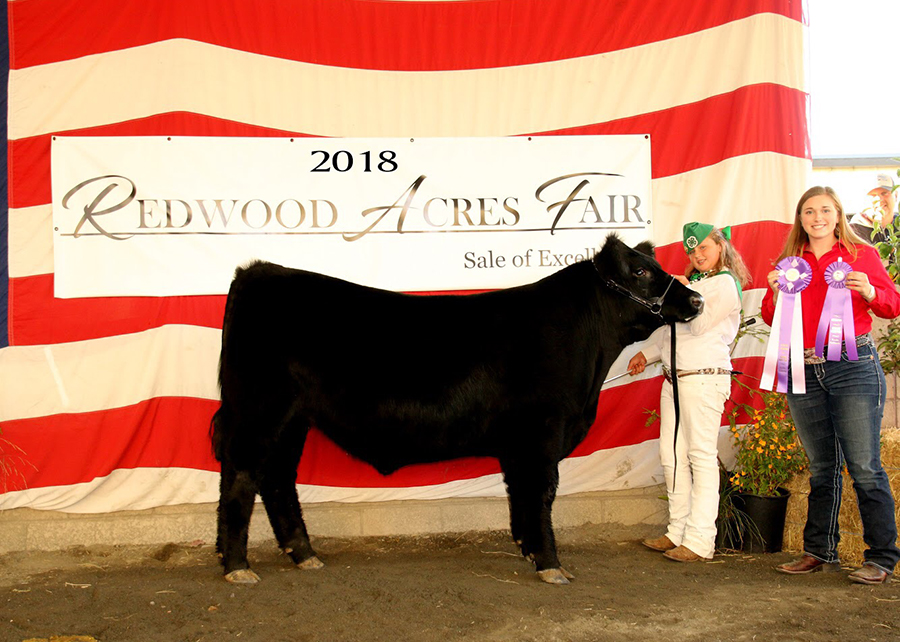 18 Redwood Acres Fair, Supreme Grand Champion, Shown by Alexa Alto