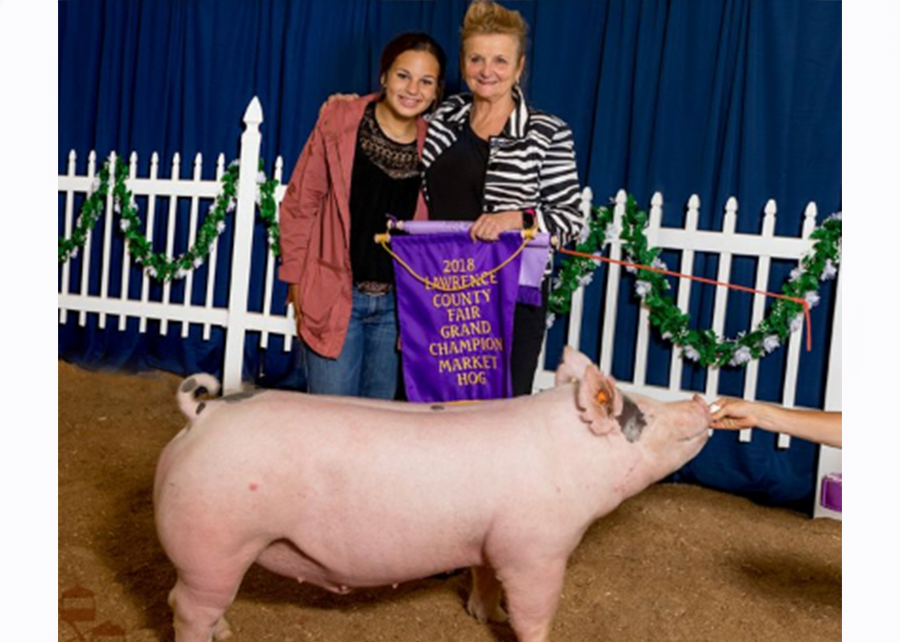 18 Lawrence Co Fair, Grand Champion Market Hog, Shown by Katelynn Bennett Champ