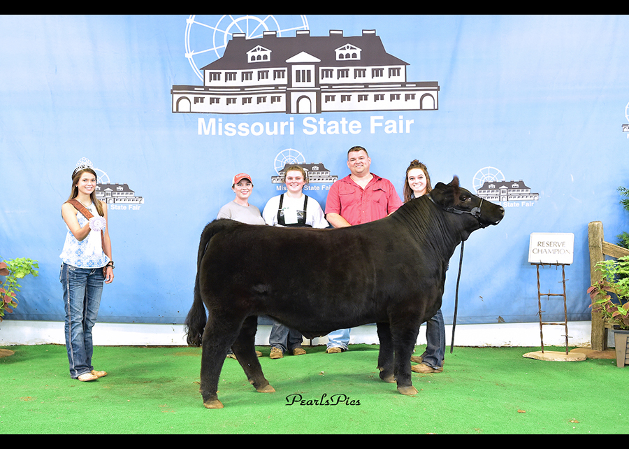 18 Missouri State Fair, FFA Reserve Champion Maintainer Steer, Show by Jillian Bryant Champ