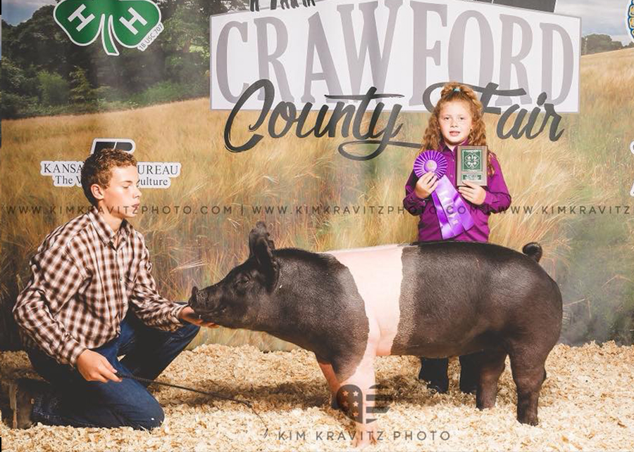 18 Crawford County Kansas Fair, Showmanship and Grand Champion, Shown by Breelee Merrell