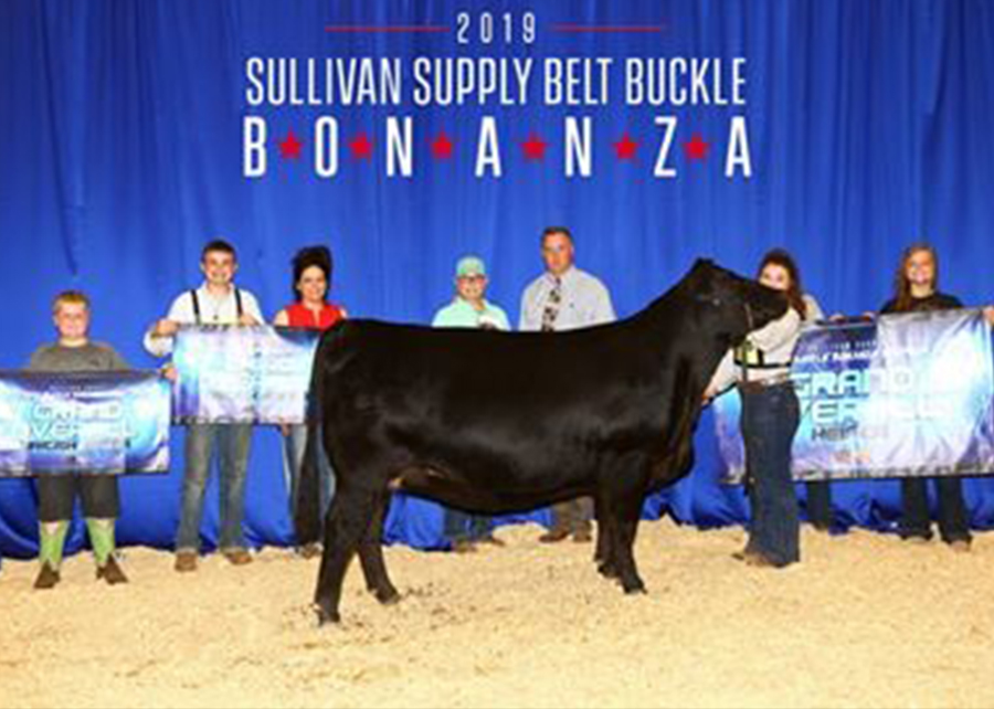 2019 Belt Buckle Bonanza, Supreme Champion Heifer, Shown by McKenzie Kostels