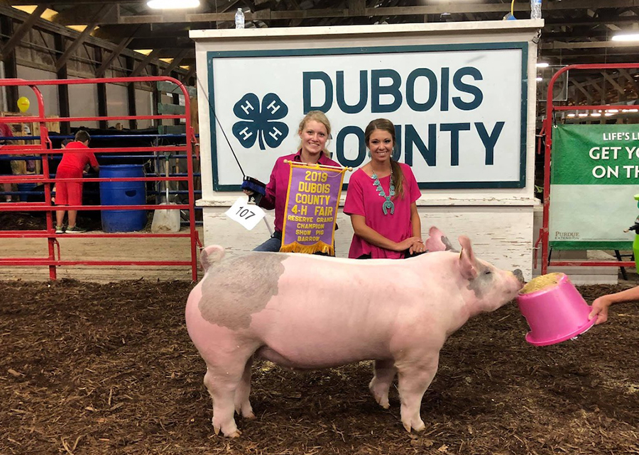 2019 Dubois County Fair, Reserve Grand Champion, Shown by Kylie Giesler