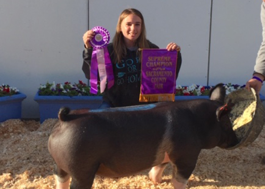 2019 Sacramento County Fair, Supreme Grand Champion, Shown by Rachel Mauch copy