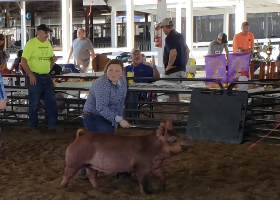 2019 Morgan County Fair, Champion Tamworth Gilt, Shown by Madelyn Stantz