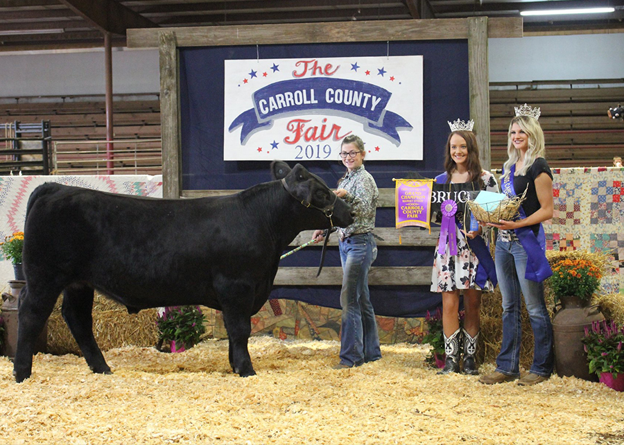 2019 Carroll County Fair and Livestock Show, Grand Champion, Shown by Cheyenne Dawson