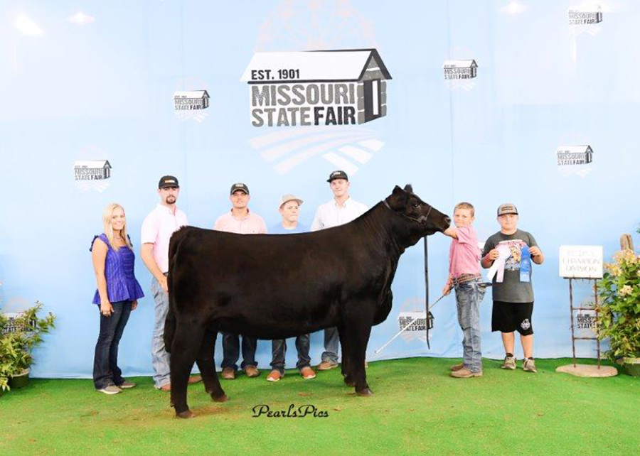 2019 Missouri State Fair, Grand Champion Purebred Simmental Heifer, Shown by Bryce Leefers-champ