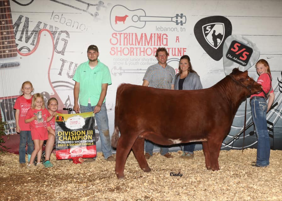 2019 Shorthorn Junior Nationals, Division 3 Grand Champion Bred & Owned Show, Shown by Madeline Berg