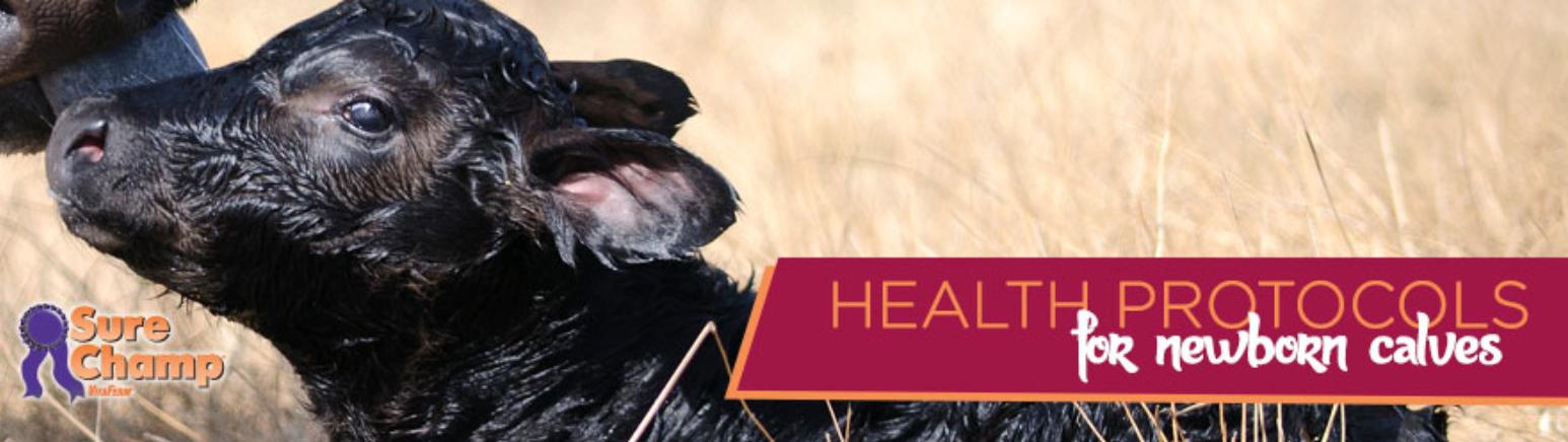 Health Protocols for newborn calves