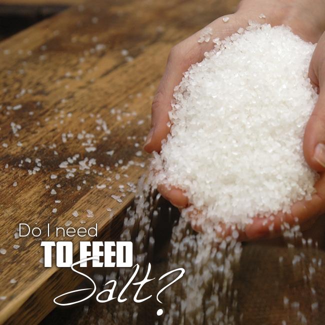 Do I Need Feed Salt Cattle