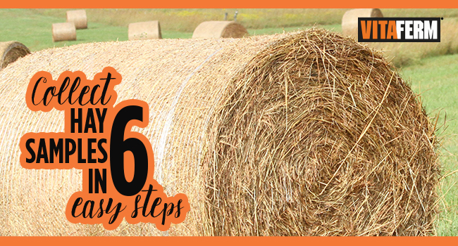 6 Simple Sets to Test Your Hay