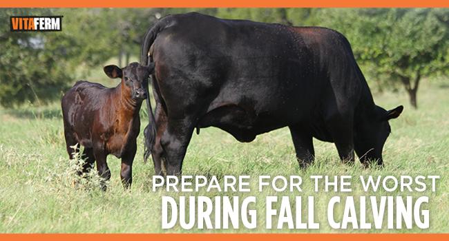 VitaFerm Tips for Fall Calving