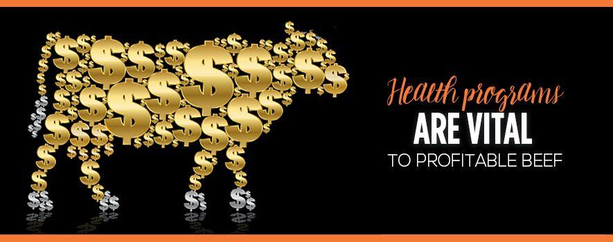Cattle Health Programs are Vital to Profitability