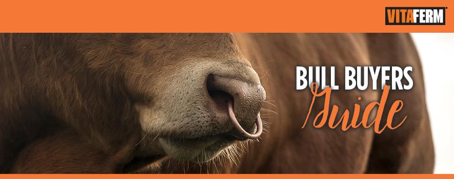 Bull Buyers Guide