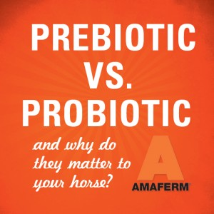 Prebiotic vs. Probiotic in horses