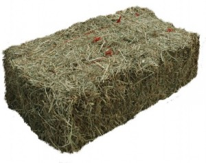 What hay should I feed my horse