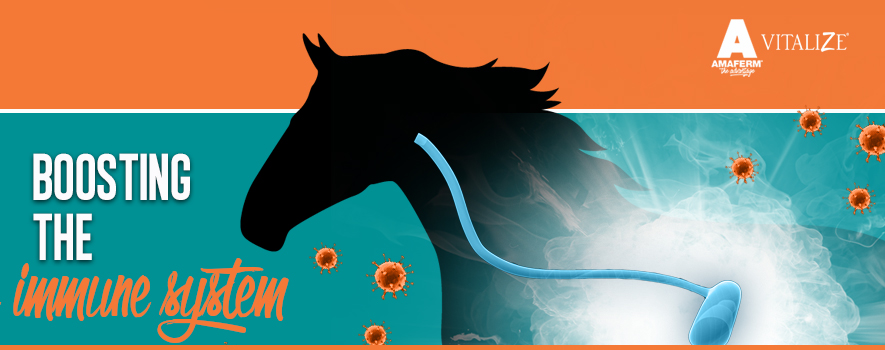 Boosting a Horse's Immune System